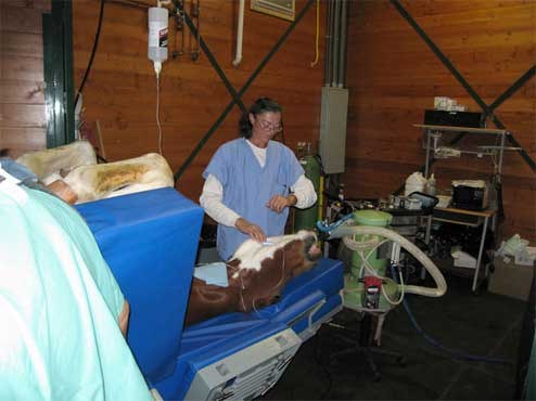 Equine Surgery Room